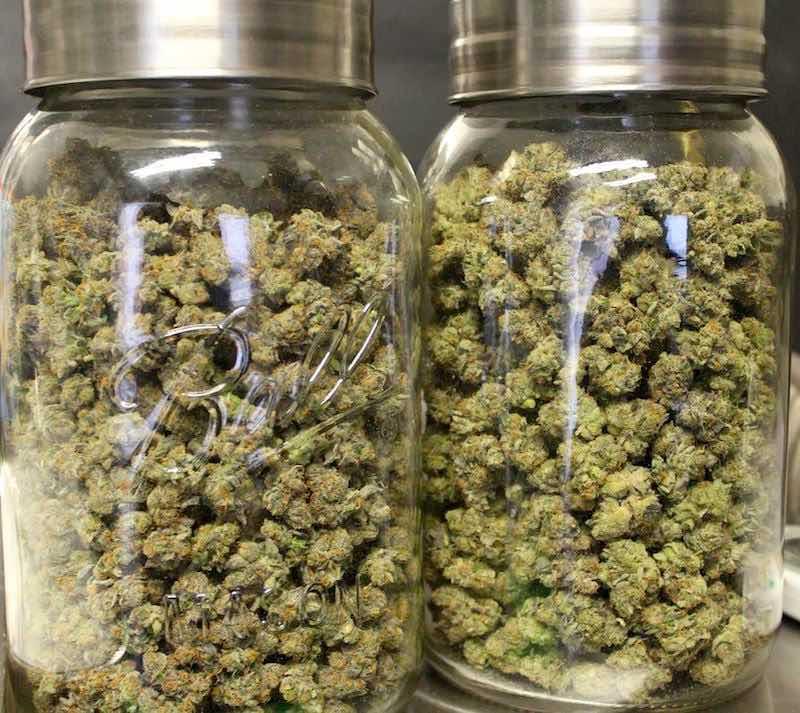 cannabis cultivation pots